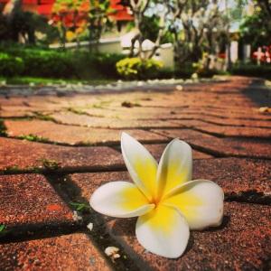 flowersinsamui
