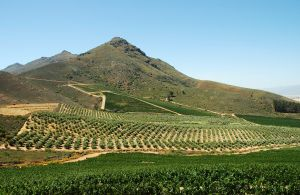 Cape Winelands, South Africa