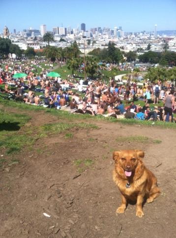 Summer in SF