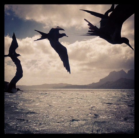 bora bora birds
