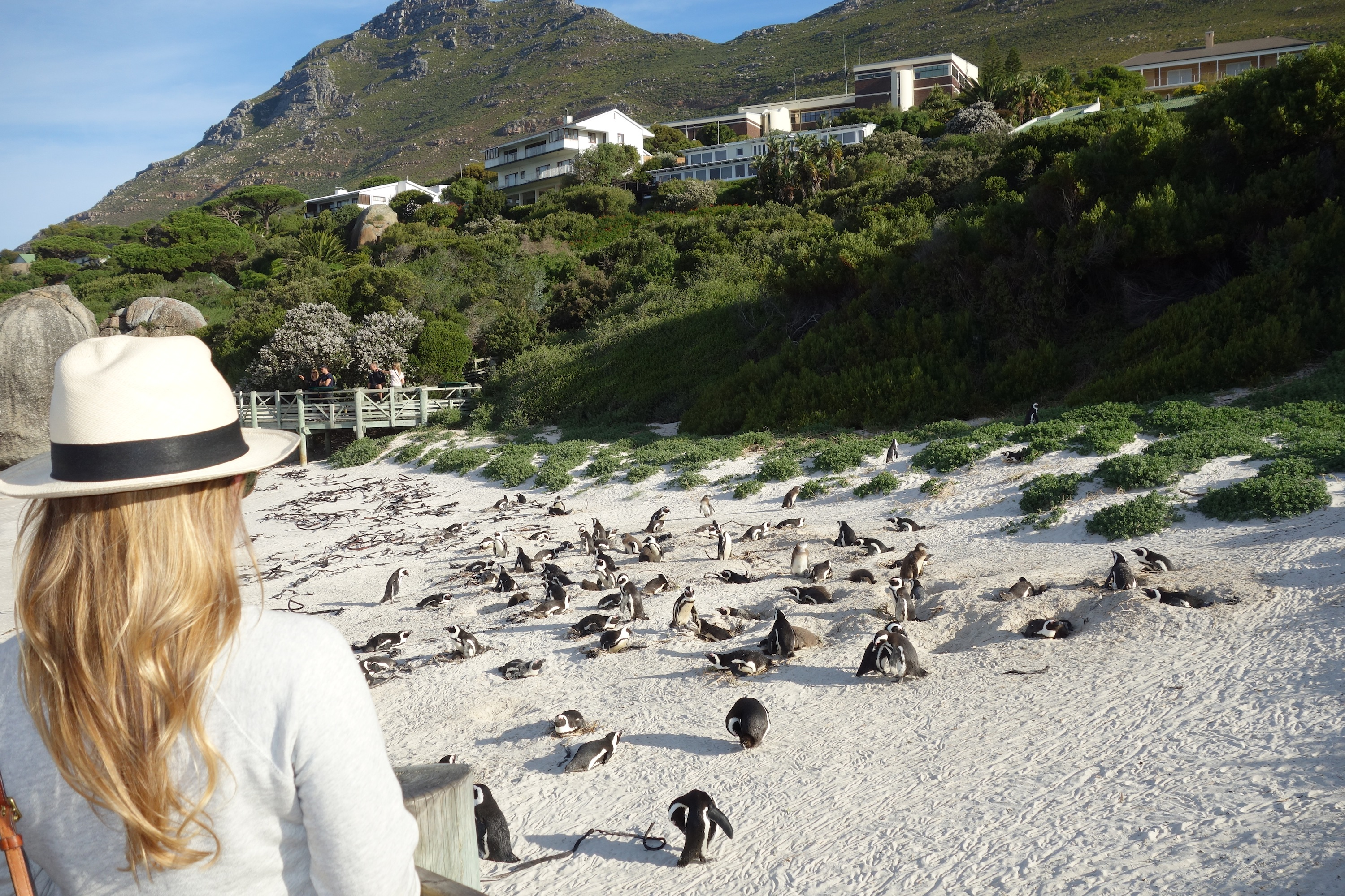 Real Non Honeymoon South Africa Part 2 Peonies To