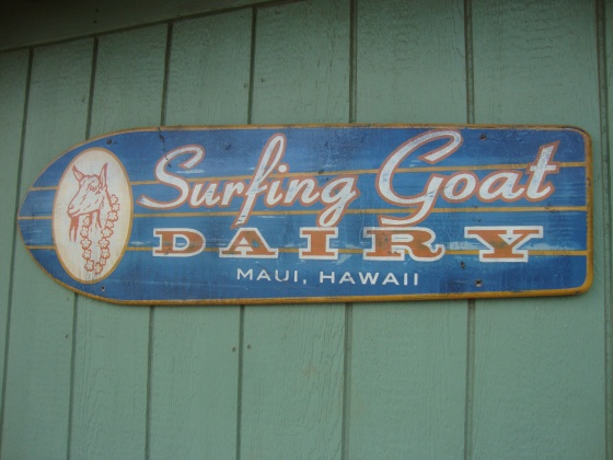 surfing goat maui