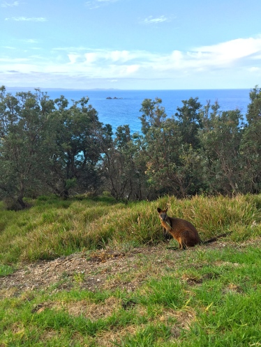 Hello, wallaby!