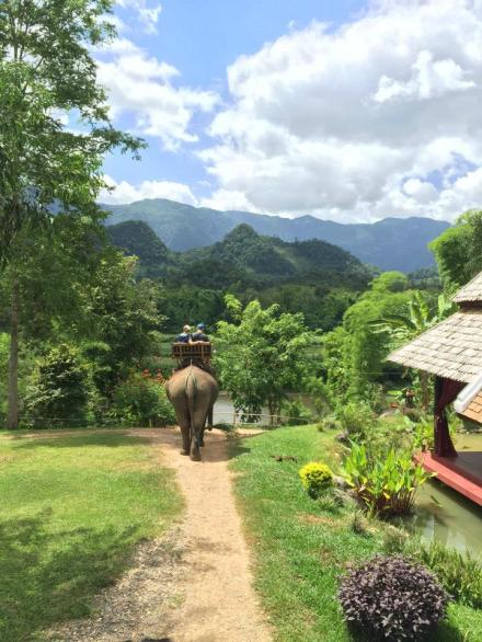 Elephants in Laos